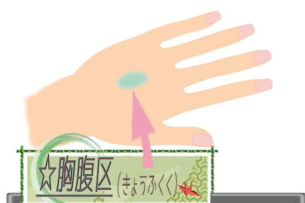 胸腹区(きょうふくく)の画像